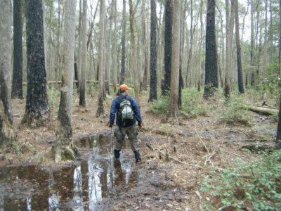 Jim-Schmid-hiking-in-swamp-Florida-Trail-Bradwell-Bay-Apalachicola-Nat-Forest