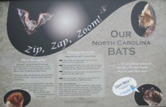Bat-interp-sign-Chimney-Rock-State-Park-NC-2016-01-01