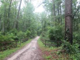 Cathedral-Aisle-Trail-Aiken-SC-6-21-17