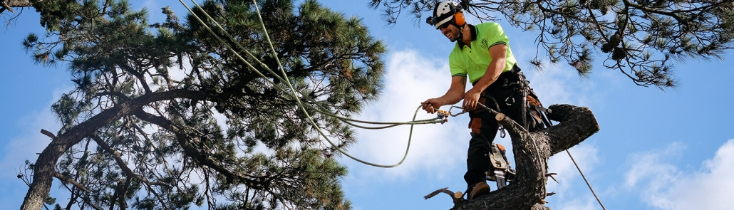 arborists provide tree services