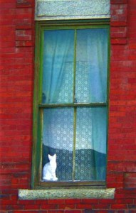 001-v-vermont-cat-in-a-window