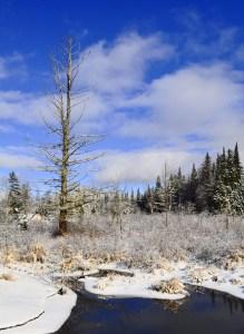 017-v-vermont-winter-tree
