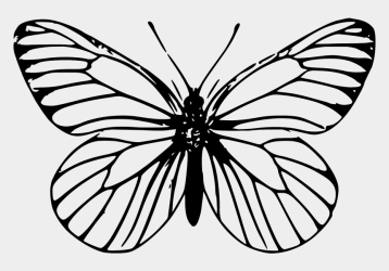 Papillon / Butterfly Butterfly Outline Cliparts & Cartoons Jing fm