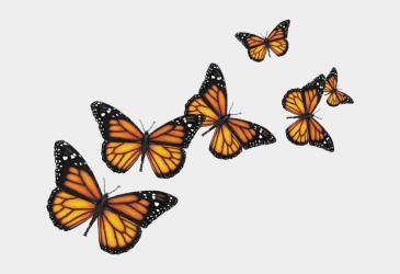 Monarch Butterfly Clipart Swarm Transparent Background Butterflies Png Cliparts & Cartoons Jing fm