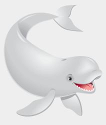 Transparent Beluga Whale Png Cliparts & Cartoons Jing fm
