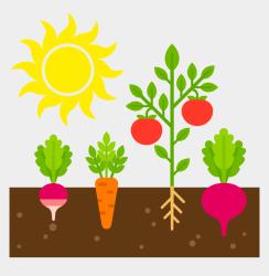 Vegetable Garden Clipart Cliparts & Cartoons Jing fm