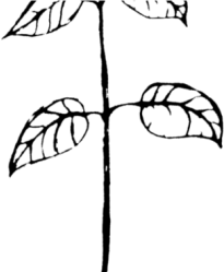 Stem Clipart Plant Drawing Parts Of A Plant Drawing Transparent Cartoon Jing fm