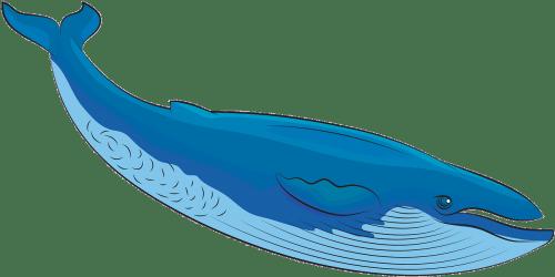 Blue Whale Clipart Transparent Cartoon Jing fm