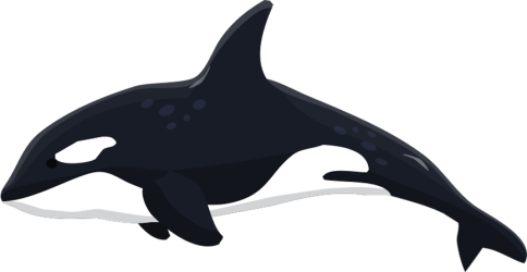 Killer Whale Transparent Cartoon Jing fm