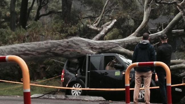 ต้นไม้หล่นมาทับรถจอดข้างถนนคือภาพที่เห็นประจำในช่วงเกิดพายุ เจ้าต้นนี้ล้มที่ Avalon