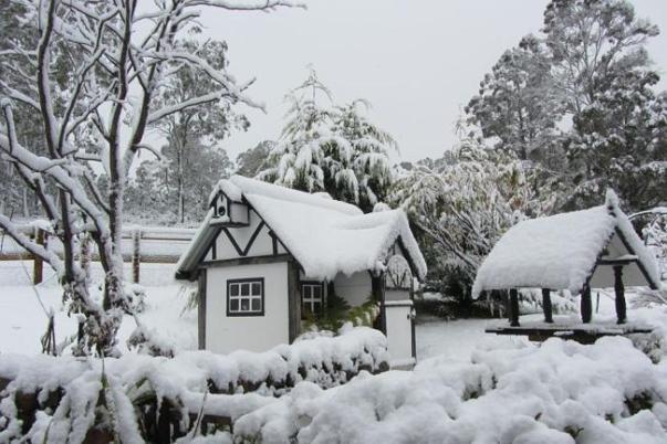 หิมะตกที่ North Yarlington  ย่าน Colebrook  ประมาณ 50 กม.ทางเหนือของนครโฮบาร์ท (ภาพแชร์จากอินเตอร์เน็ต)