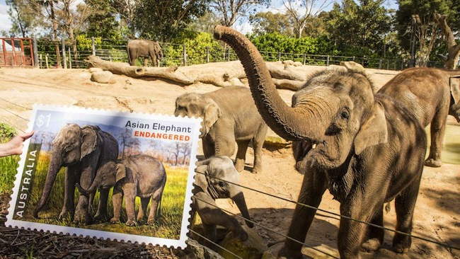 ช้างไทยในสวนสัตว์เมลเบิร์น ปรากฎอยู่ในดวงตราไปรษณียากรณ์ออสเตรเลียล่าสุด