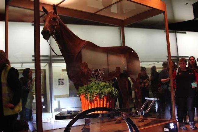 ม้า Phar Lap ถูกสต๊าฟไว้ในสภาพที่สมบูรณ์ที่พิพิธภัณฑ์ Melbourne กับเค้กวันเกิดครบรอบ 90 ปีทำด้วยแครอทอาหารโปรดของม้าในตำนานที่ไม่มีวันลืม : ภาพจากสำนักข่าว ABC
