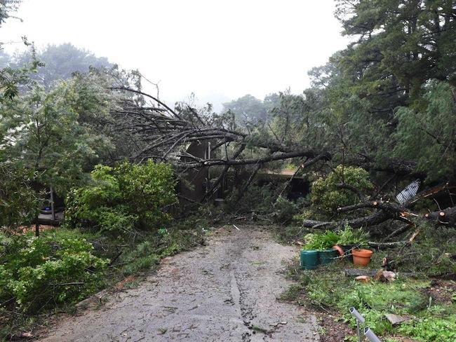 บ้านหลังหนึ่งได้รับความเสียหายจากต้นไม้ล้มทับ : ภาพจากนสพ. The Advertiser