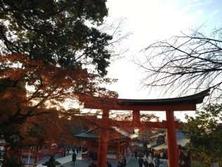 Torii and lovely leaves