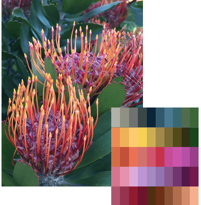 Protea – A Bundle With So Many Possibilities