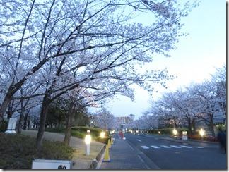 JT-sakuranotoorinuke-2019-04-04 (2)