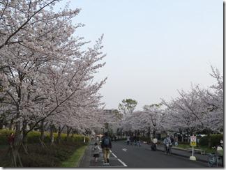 JT-sakuranotoorinuke2019-04-06 (6)