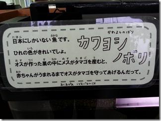 akuapiaakutagawa (19)