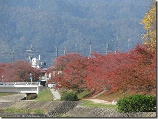 hanaseyamanoiewomezasu (5)