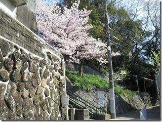 ikeda-sanpo (11)