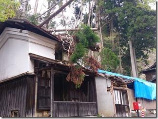 kumogahara-oomori (58)