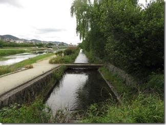 misosokigawa-kamogawa-hotaru-sijyoumade (4)