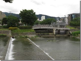 misosokigawa-kamogawa-hotaru-sijyoumade (8)
