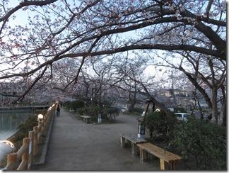 nagaokatenmanguu-sakura-raitoappu (22)