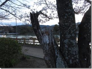 nagaokatenmanguu-sakura-raitoappu (29)