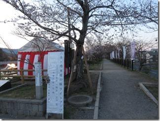 nagaokatenmanguu-sakura-raitoappu (2)