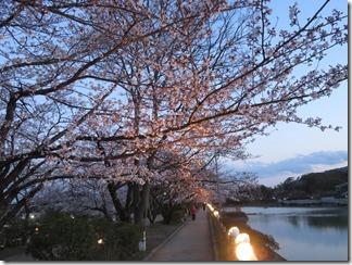 nagaokatenmanguu-sakura-raitoappu (44)