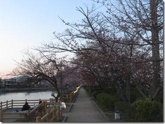 nagaokatenmanguu-sakura-raitoappu (7)