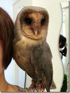 owl-cafe (18)