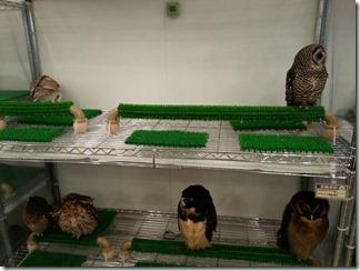 owl-cafe (25)