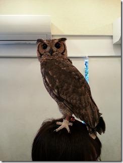 owl-cafe (7)