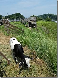 the-Farm (16)