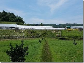 the-Farm (6)