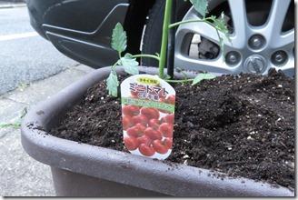 tomato (10)