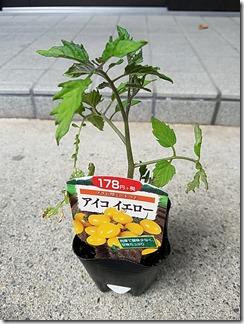 tomatonae-kateisaien (1)