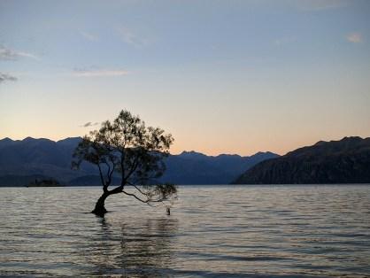 Wanaka tree.