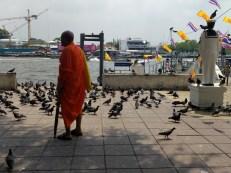 Monk & pigeons.