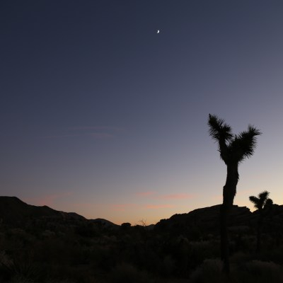 Photo Diary: Joshua Tree National Park