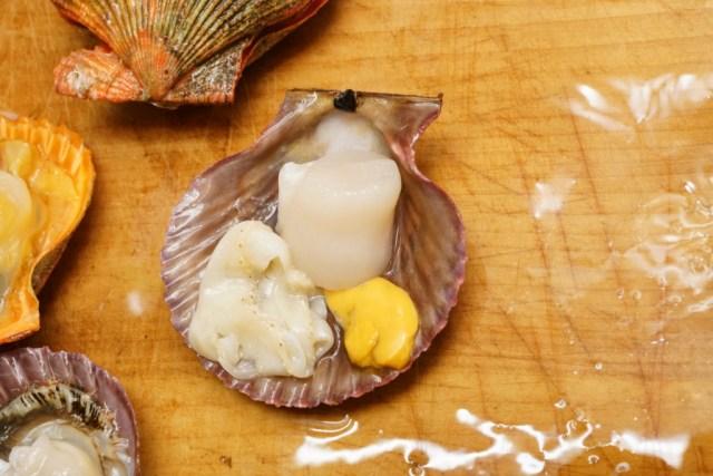 ヒオウギ貝のメスはオレンジ色の卵巣が特徴