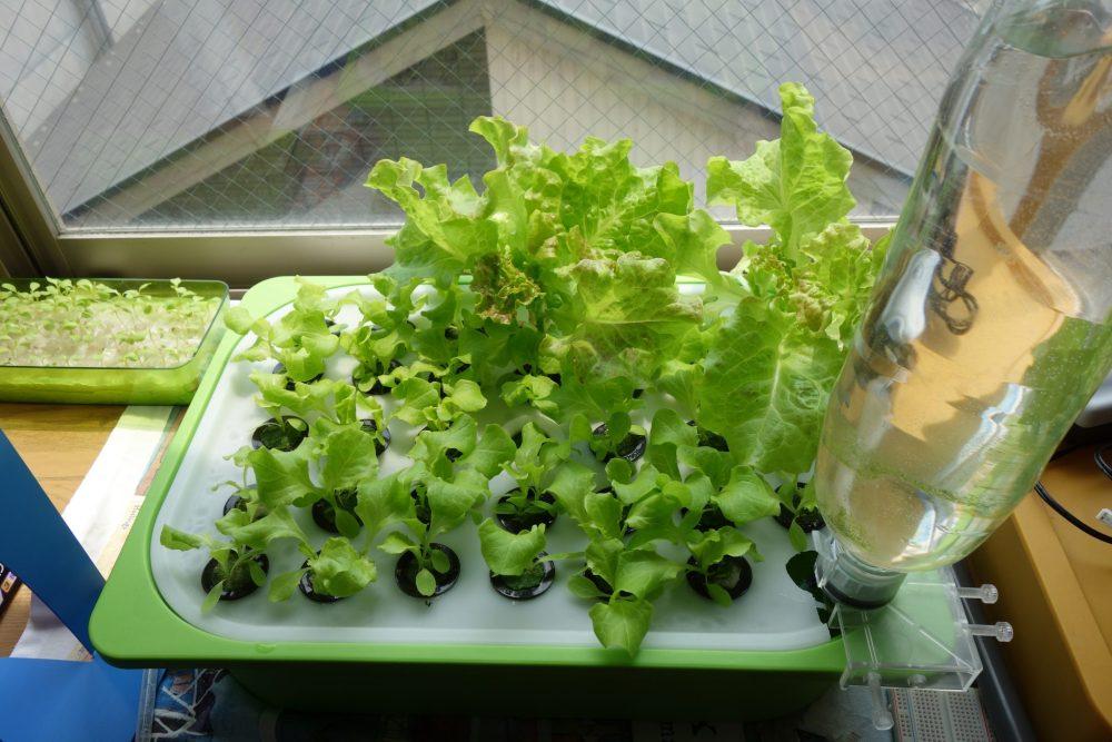簡単にできる水耕栽培装置