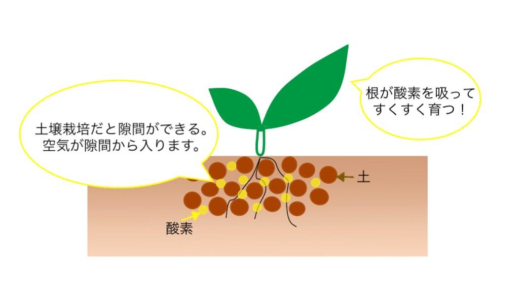 適切な土壌の状態なので根が十分酸素を吸うことができ根腐れが起きていない様子。