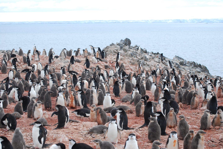 Любов срещу заплащане на Южния полюс (видео)
