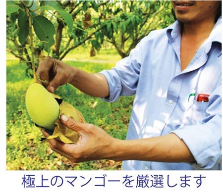 タイからの贈り物にマンゴー