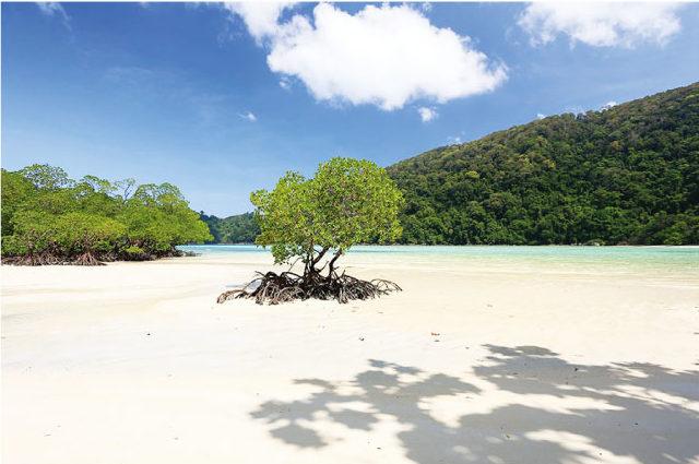 手付かずの自然が残るスリン島