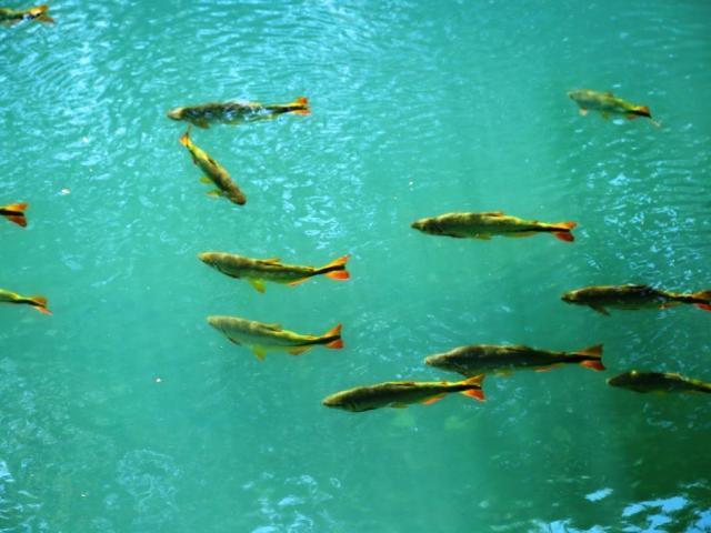 Fische, Flipflops und Fachwerkhäuser
